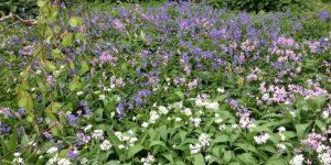 Stinsenplanten: boshyacint en daslook