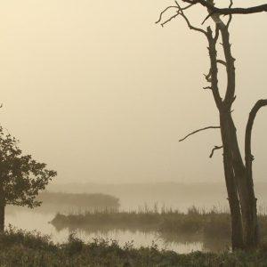 2. Oktober 2015; Mart Meeuwsen; Polders Poelgeest in de mist