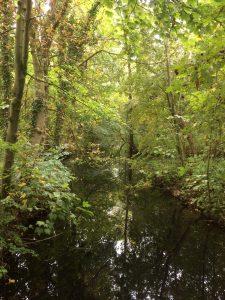 Het dicht begroeide parkbos van Rhijngeest